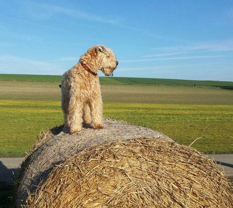 Ben auf einem seiner Sonntagsspaziergänge im Sauerland
