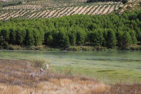 Contraembalse de Bermejales in Cacín
