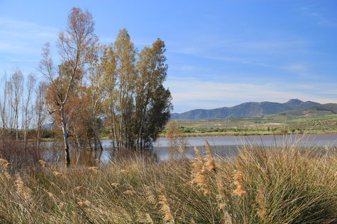 One of the lakes in El Padul