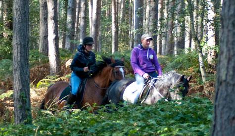 Reiten durch den Darßer Wald