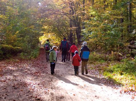 Spaziergang durch den Darßer Wald