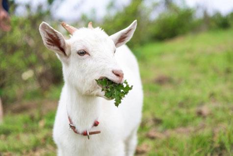 モンテッソーリの活動では、生き物に接することも大切な活動と捉えています。