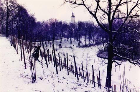 Weinberg im Winter, Mitte der 90-er Jahre, Blick in Richtung Kirche