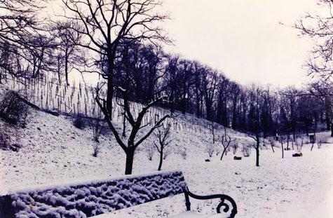 Weinberg im Winter, Mitte der 90-er Jahre, Gesamtansicht