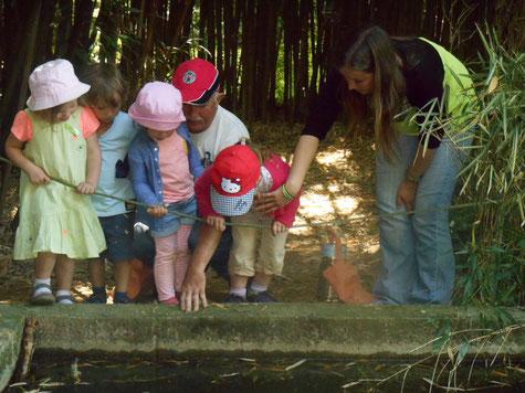 A la découverte des grenouilles