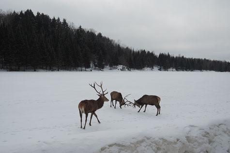 Parc-Omega-Québec