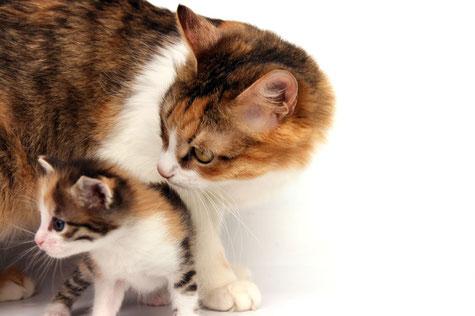 Katzen Diagnostik