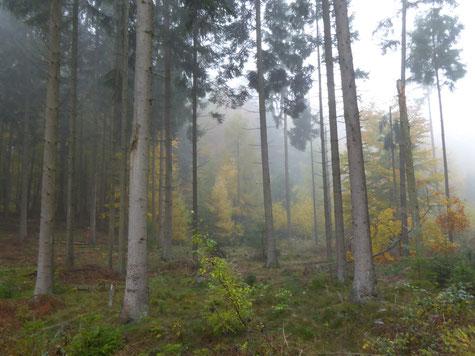 Wälder des Nordens c) Elke Gelzleichter