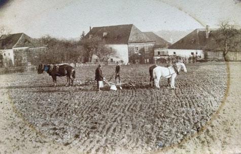 Mit den Pferden bei der Ackerarbeit