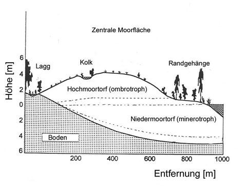 Fig. 1: Schema eines Hochmoores
