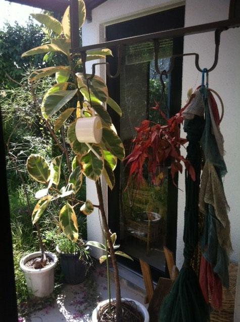 普通に、、「植物のある生活っていいですよね!」って言いたいとこだけど、意識したことは無いな~、、、こちらは放置状態www