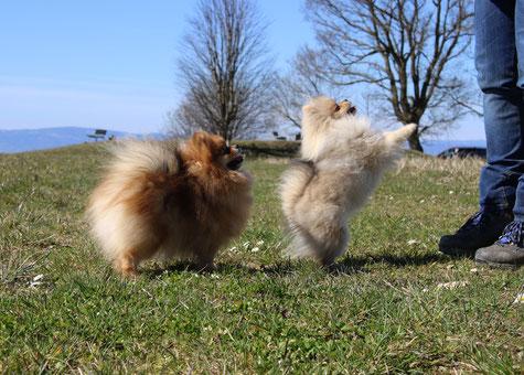 Beeboo und Lilli geniessen den schönen spaziergang.