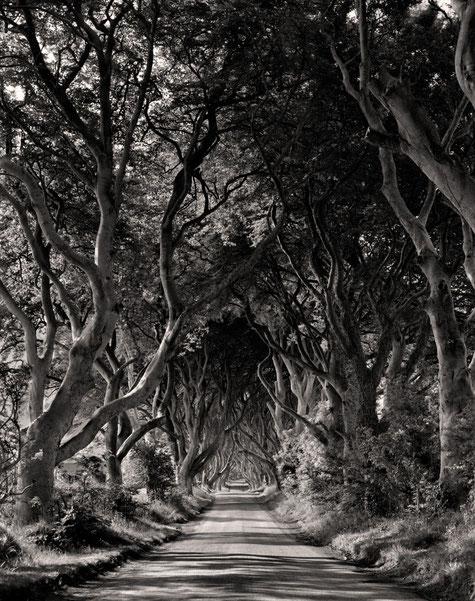 Bild: Dark Hedges, Irland, Tmax 100, Scan mit Trommelscanner, Fotograf Sebastian Dziuba, Drumscanner, Drumscan, Trommelscan, Digitalisierung