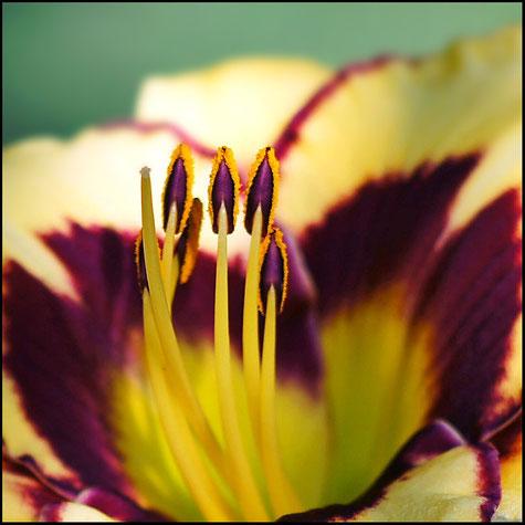 Макросъемка цветов - природа крупным планом