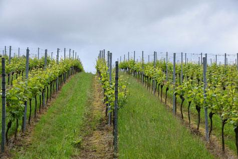 Spitzen-Hänge rund um Weingut Nägelsförst sind die Basis für qualitativ hochwertige Weine