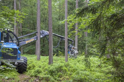 Holz-Vollerntemaschine  [© Foto: Dr. Gerhard Strobel]