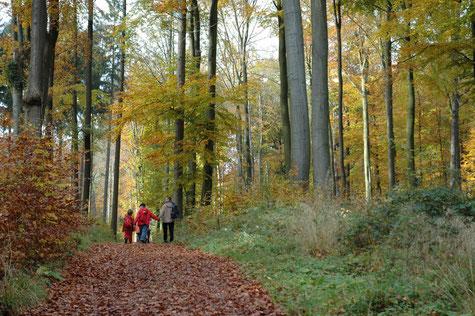 Wanderer im Teutoburger Wald © Stadt Detmold