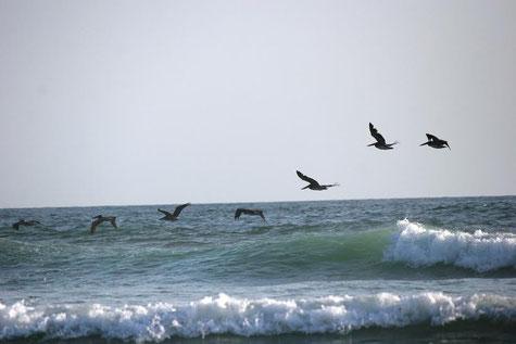surfgasm - meerdavon - ölifetravellerz - strand -welle - surfen