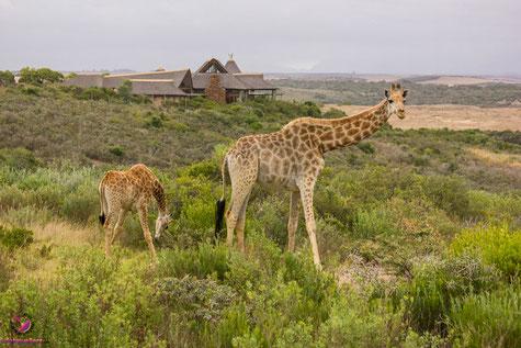 Safari Packliste für Südafrika