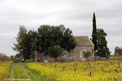 Spirit Sherry Weingut in Jerez de la Frontera
