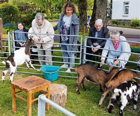 Unterhaltung der besonderen Art boten die Ziegen im Haus Mühlental in Schenefeld.