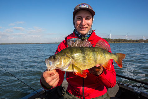 Spin fishing in Holland - Guide Luca Nardin with perch on Lund Boat at Volkerak Oude Tonge, Netherlands