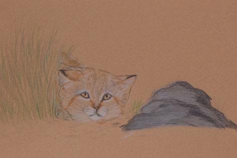 Sandkatze - Zeichnung K.Mirus https://www.facebook.com/wildbeautyart/