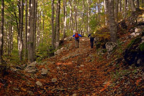Zwei Männer mit Nordic Walking Stöcken im Wald bunte Blätter Herbst