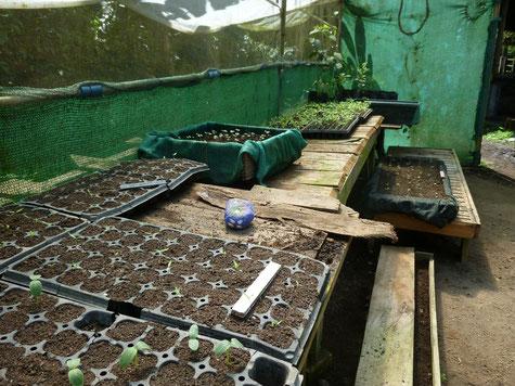 Bio Samen selber anziehen