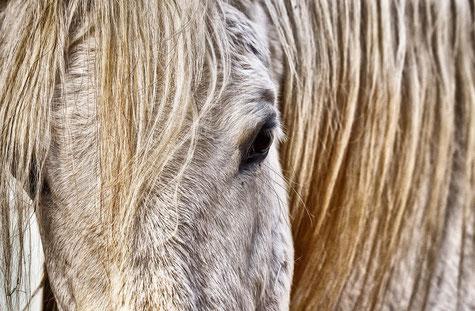 Online Tierkommunikation lernen, professionelle Anleitung für erfolgreiche Tierkommunikation