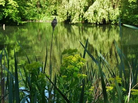 Teich im Naturpark Seebenstein, die Stille eines Sommertages