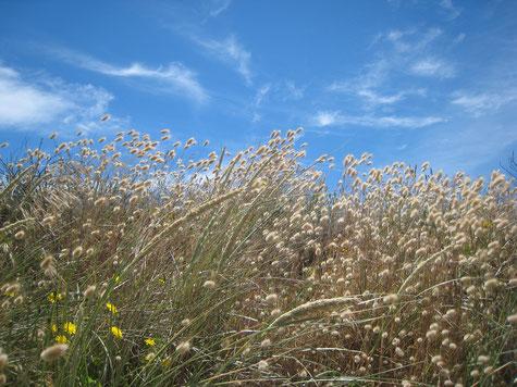 Graslandschaft mit Wolkenhimmel