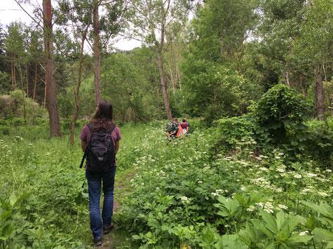 Gehmeditation in der Natur, Kamptal in der Nähe vom 'Öden Schloss'