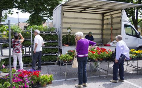 Geranien, Petunien und Gemüsepflanzen auf dem Markt