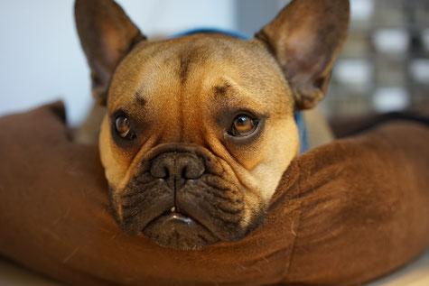 Milo unser Hund