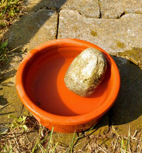 Unsere Insektentränke - durch den Stein kommen die Insekten nahe an das Wasser heran.