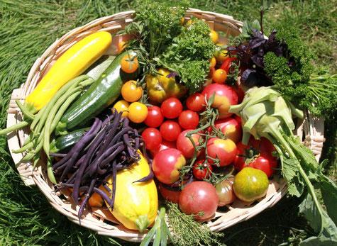 Permaculture, jardin potager, productif, rennes