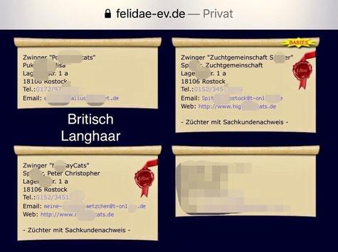 April 2020,Verkaufsannonce von British-Langhaar-Babys der Zuchtgemeinschaft S. aus Rostock auf der Webseite von felidae-ev.de