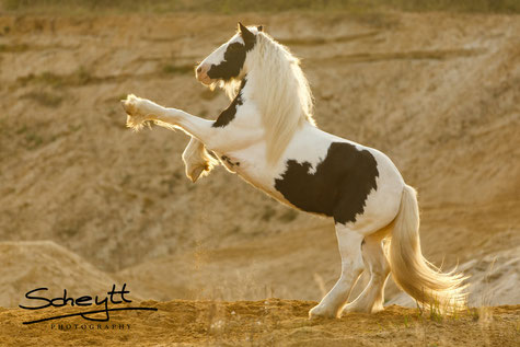 Geschenke für Pferdefreunde - Geschenke für Reiter - Geschenke für Pferdeliebhaber