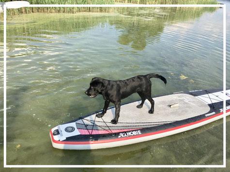 Hund auf Paddelboard im Naturpark Westensee