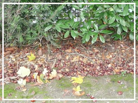 privilegejardin.com  - gestion écologique des feuilles mortes
