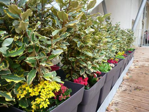 privilegejardin décor entreprise grands bacs avec arbustes et fleurs