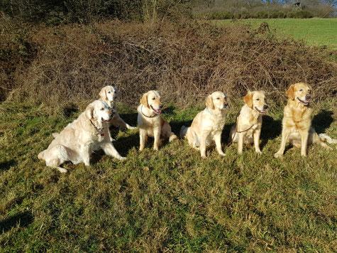 4 Generationen zusammen -von links Mia, Blue, Maisie, Fanni, Bella und Dina