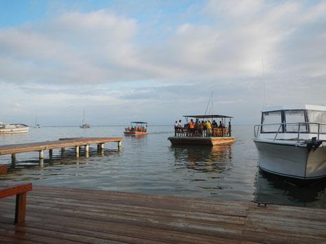 Flossfähre mit Pferden von Roatan nach Little French Cay