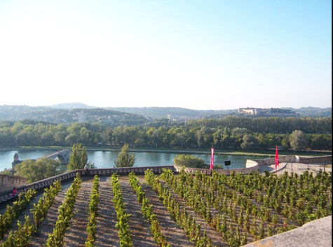 Der Garten Doms in Avignon Mit Blick auf den Fluss Rhone