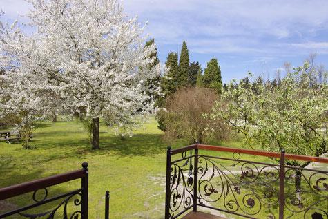 La roulotte du clos des Sorgues et les cerisiers de Provence