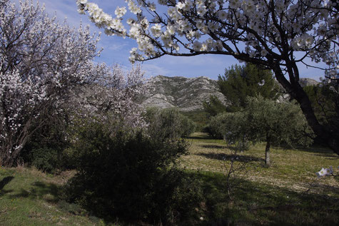 The Alpilles region