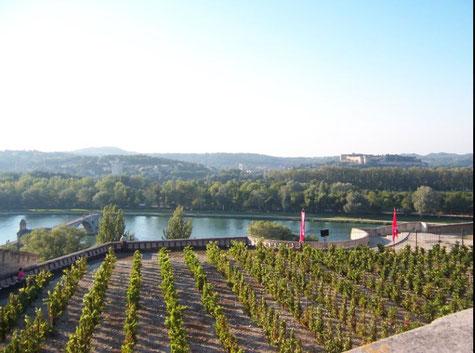 Le jardin des Doms à Avignon domine le Rhône