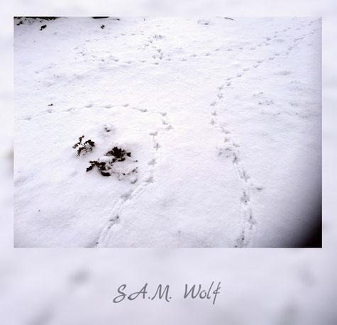 sam wolf-Autorin-Simone Müller-Krimi-Märchen-Mystery