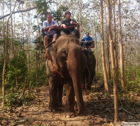 wenn ich schon mal da bin, dann will ich auch auf nem Elefanten reiten, wieviel PS der wohl hat